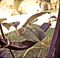 hdr leaves by barefootphotos