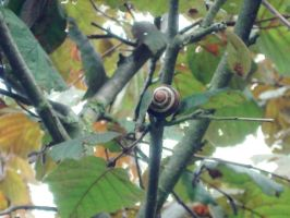 Snail in the tree by M0rwenn4