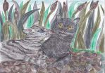 Graystripe and Silverstream by Nianes