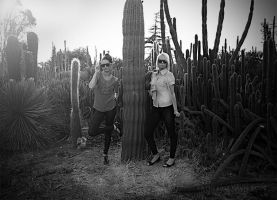 Cactuses by KatherineDavis