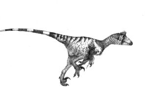 Deinonychus by Monopteryx