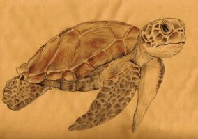Turtle by Animal-Amans
