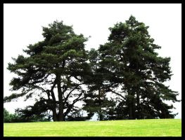 The Twintrees by jibirelle