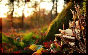 the autumn is coming by Equipage