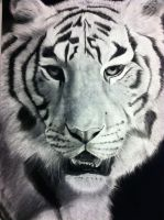Bengal Tiger (Charcoal Drawing) by VampanezeLordess