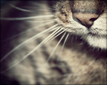 Cat.6 by lallirrr-photography