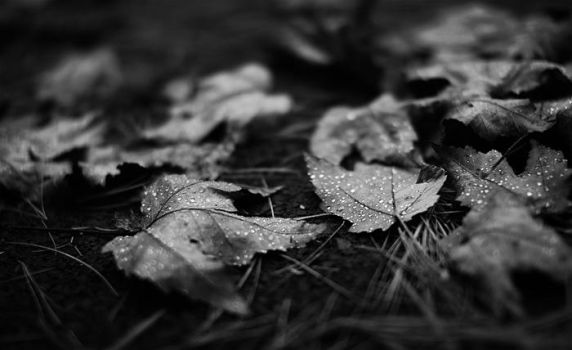 Leaves Dos by fecklesslytrying
