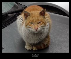 So what ? mrrrr by cat-lovers