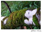 Rainforest_3 by GoblinStock