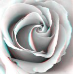 White Rose 3-D conversion by MVRamsey