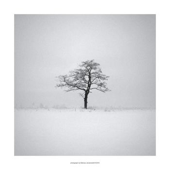 Alone in the fog. Creative enough? by mariv
