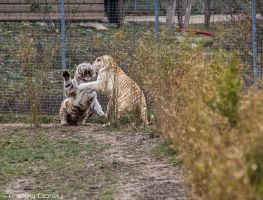 White Tiger Fight by Talos-X