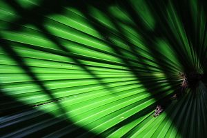 Palms and Shadows by timseydell