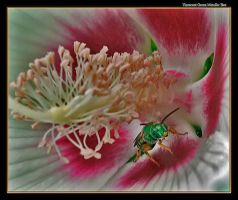Green Bee in a Flower by boron