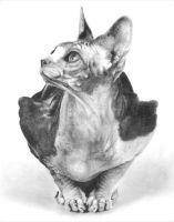 Sphynx Cat by chandito