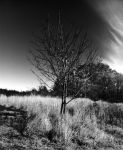 Lone tree by bpcampbell