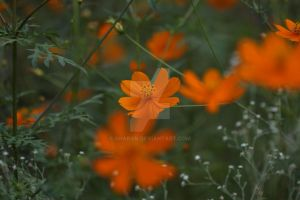 Orange Green Nature by sharan