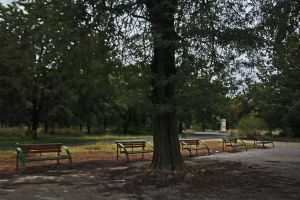 Benches behinde the tree by dardaniM