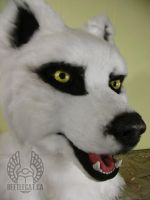 White Wolf Head by Beetlecat