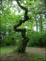 The Serpent Tree by Estruda