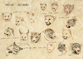 wild cats - face studies by Thianari