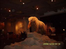 St.Louis Arch: Bear by CaptainFluffy