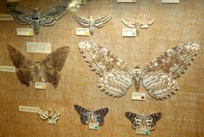 Hogle Zoo 74 - Moths by Falln-Stock