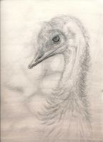 Emu by mxrshmellow