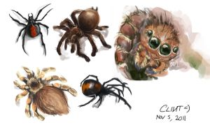 Spiders Study by TheClintHennesy