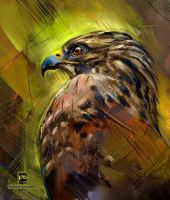 20161004 bird of prey psdelux by psdeluxe