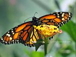 Another Butterfly by Egil21