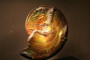 Ammonite by wolfphotography