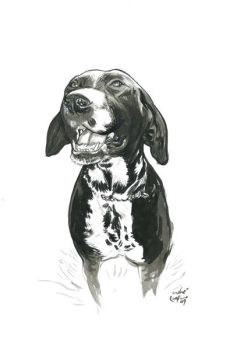 Dog by AndreIllustrates