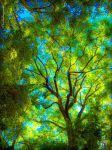 Emerald Forest by Cloudwhisperer67