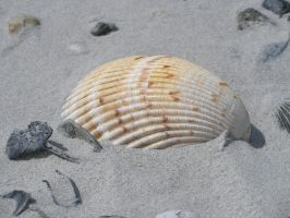 Shells 003 by OverStocked