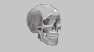 Skull : Practice by VinceJay