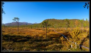 Autumn in the bogs by JotHa