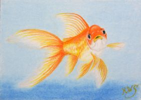 Goldfish by KW-Scott