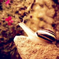 snail :D by all17