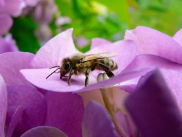 Bee by Smile-Denise