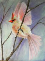 Female Cardinal in Morning Light by kcthreads