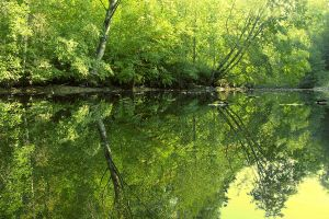 green reflection by KariLiimatainen