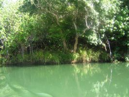 tropical river view 17 by CotyStock