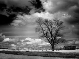 Black Tree infrared... by MichiLauke