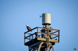 Sentries by ShannonCPhotography