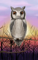 White Faced Owl by Kreemee