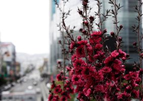 Flowers in the City by shelbybonilla