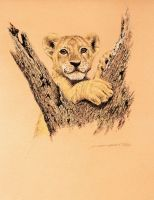 Lion cub - untitled by donaldsart