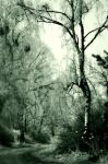 IMMERSED IN FROST by 666Kain-666