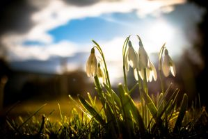 spring come early by DanielGliese